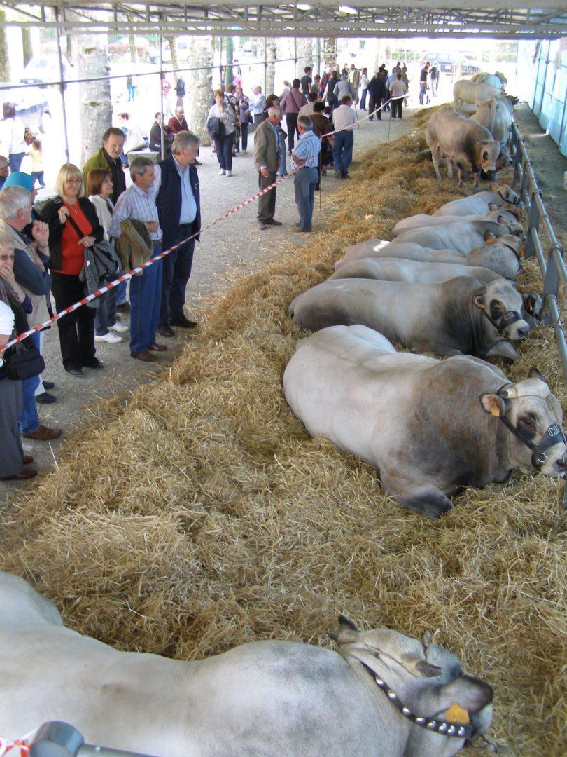 cavour-carne-di-razza-piemontese